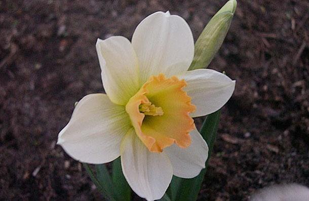 Модные цветы сезона весна 2013: Фото