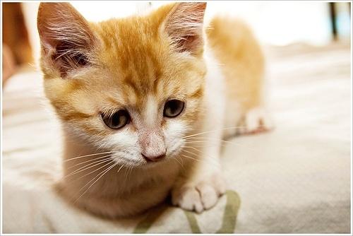 Коты: Фото