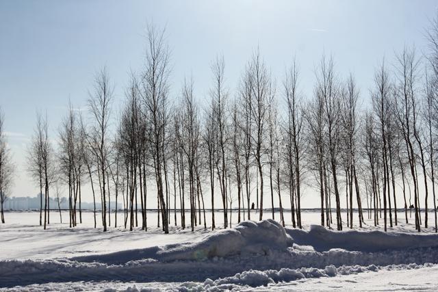 Деревья и газоны: Фото
