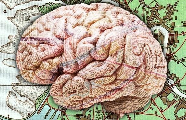 Полумумия, полухельсинки: будущее Петербурга – с мозгами или без
