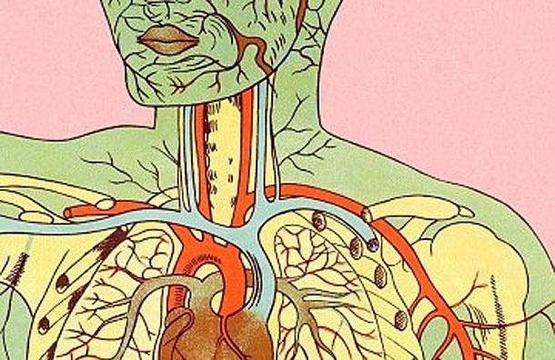 Ученые создали модель тела человека по принципу «Google map»