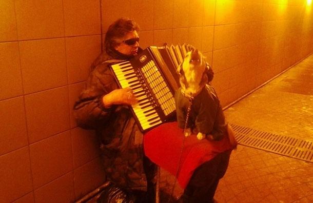 Сага о московских переходах. Поющая собака - звезда Бутырской