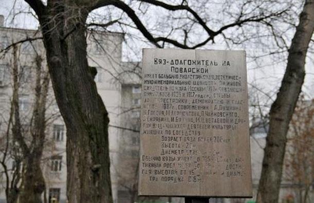 В центре Москвы спилили 200-летний вяз