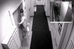 В Петербурге собаку убило лифтом из-за пьяного хозяина