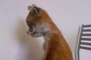 В Москве предпочли не связываться с Упоротым лисом и отменили выставку