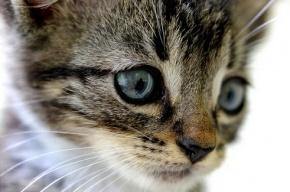 День кошек 1 марта отмечают в России