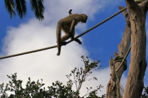 В Ленинградском зоопарке создадут остров обезьян и тропический дом с бегемотами
