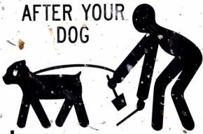 За гадящих собак и кошек введут штрафы