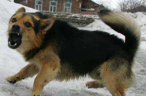 В Ленобласти депутат расстрелял собак из ружья при детях