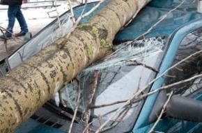 На Васильевском острове упавшее дерево оборвало провода и повредило две машины