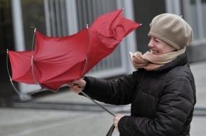 В Петербурге усиливается ветер, предупреждают спасатели