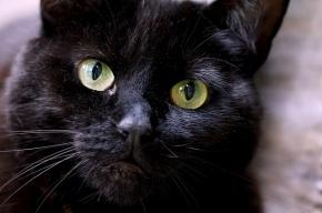 Петербуржец предложил приставам арестовать своего кота вместо телевизора
