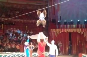 Медведь-канатоходец сорвался с каната в Цирке на Фонтанке, рассмешив Вадима Тюльпанова