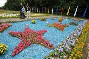 Пути следования вип-кортежей G20 в Петербурге украсят цветами