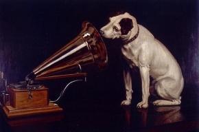 Петербургский музей на свою выставку пригласил собак