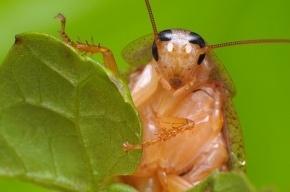Глава Ленобласти сравнил мигрантов с тараканами