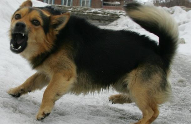 В Приамурье собака загрызла 3-летнего мальчика, пытавшегося ее покормить