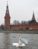 Фоторепортаж: «Медведь на льдине у Кремля»