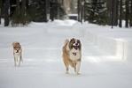 Путин, собаки, снег, март 2013: Фоторепортаж