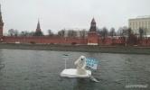 Медведь на льдине у Кремля: Фоторепортаж