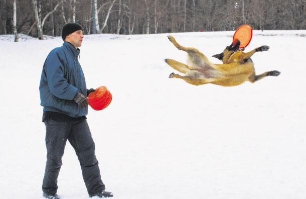 В краю летающих собак. Что такое дог-фрисби?