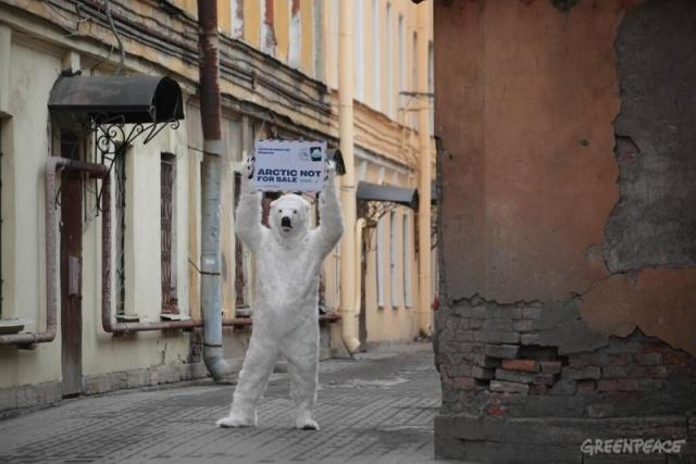 Белый медведь в Петербурге: Фото