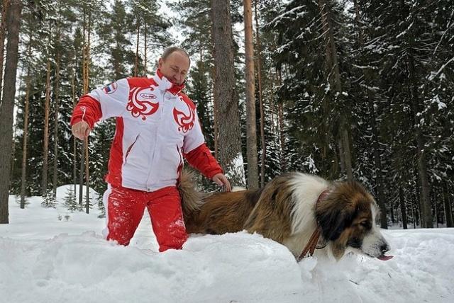 Путин, собаки, снег, март 2013: Фото