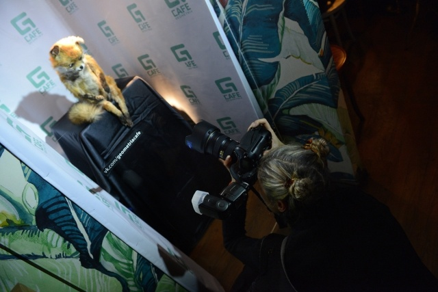 Выставка Упоротый лис в Петербурге: Фото