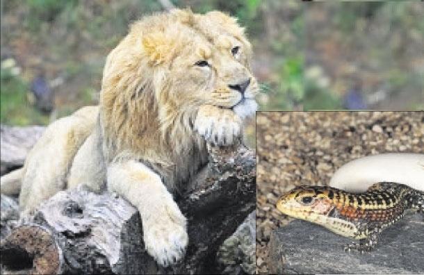 ВМосковском зоопарке появились новые обитатели: азиатский лев иродственники динозавров