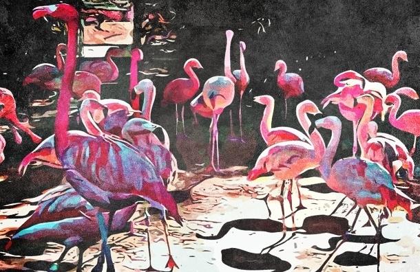 10 самых интересных зоопарков мира
