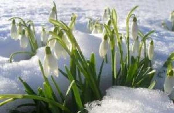 Долгожданная весна придет в Москву на следующей неделе