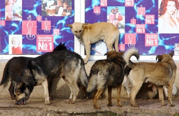 В Сочи перед Олимпиадой ликвидируют бродячих животных