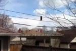 В сеть выложили видео енота, гуляющего по натянутым электропроводам