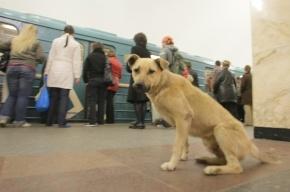 Петербургский метрополитен заплатит тем, кто поможет поймать собак на станциях