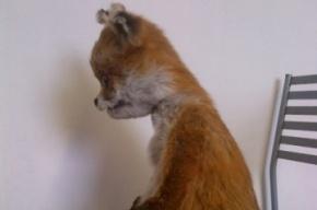 Выставка Упоротого лиса в Петербурге оказалась под угрозой срыва