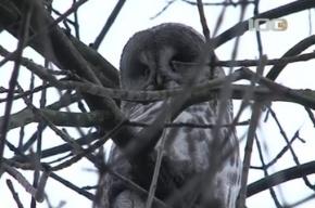 В Невском районе на дереве сидит сова