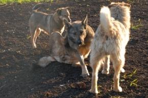В Петербурге собаки обезглавили местного жителя