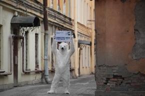 Белый медведь из «Гринпис» гуляет по Петербургу с плакатом «Арктика не продается!»