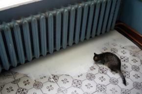 Мошенники в 11 раз завысили цены на тепло в Невском районе