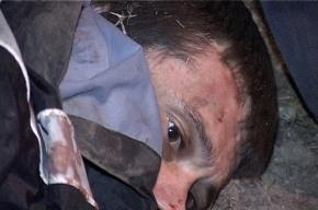 Глава МВД Колокольцев рассказал Путину о задержании белгородского стрелка