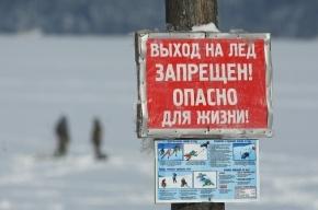 В Ленобласти пенсионер утонул, спасая свою собаку