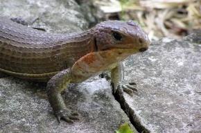 Родственник динозавра вылупился из яйца в зоопарке Москвы