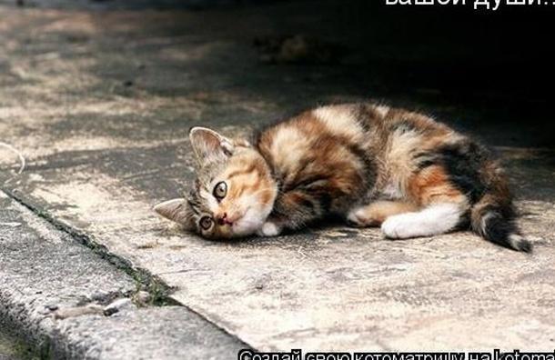 В подвале Дома на набережной целую неделю морят голодом кошек
