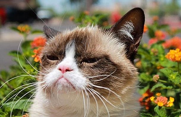 Сварливая Кошка снимется в кино - Guardian