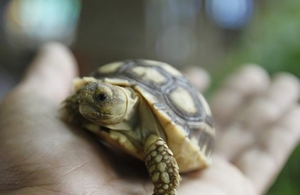 В Оренбурге обнаружили десятки мертвых черепах в мусорных баках