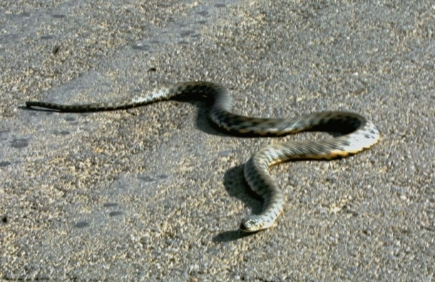 Шестиклассница из московской школы принесла змею на ЕГЭ