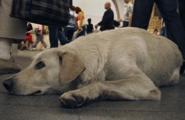 Москвичи требуют отбирать животных у попрошаек