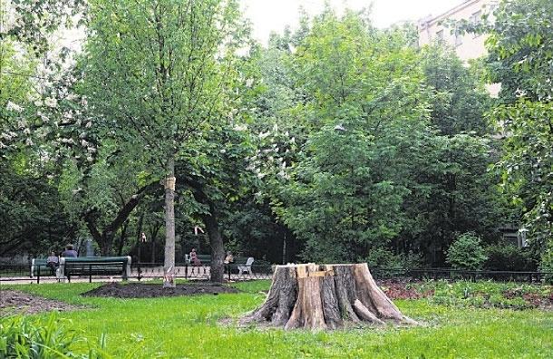 Вместо спиленного 200-летнего вяза на Поварской посадили молодое дерево