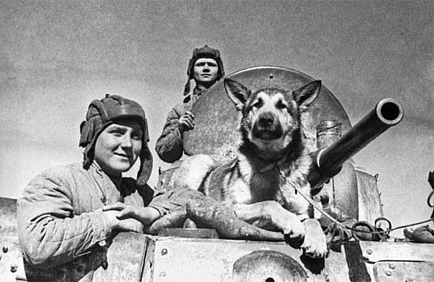 Раненого Джульбарса пронесли на Параде Победы в Москве на кителе Сталина