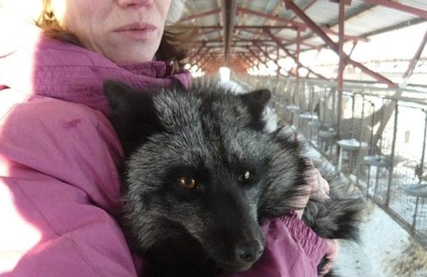 Игуана вместо кошки. Каких экзотических животных держат дома москвичи